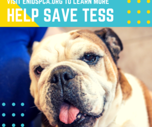Tess Needs Your Help