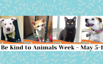 05-08-19 Get Your Paws on this Week's News Flash
