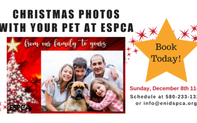 Christmas Photos with Your Pet