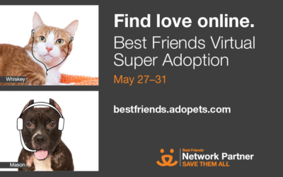 First-Ever National Virtual Super Adoption Event